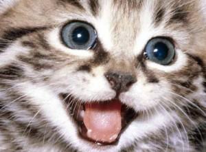 gatitos cuidados alimentacion