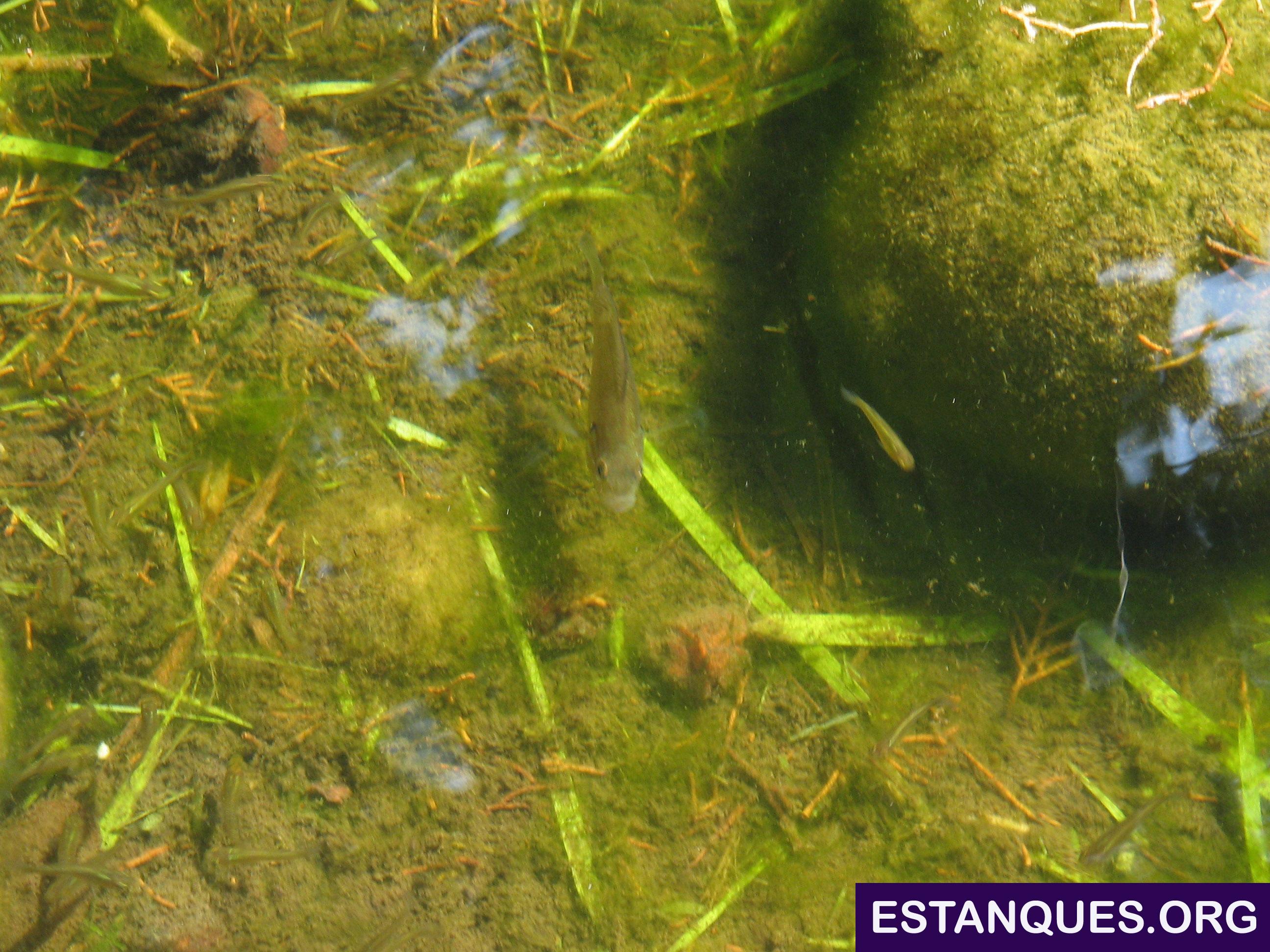 Peces acechando a sus presas en un estanque de fotos gratis for Estanque de agua para peces
