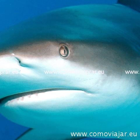 aleta de tiburon