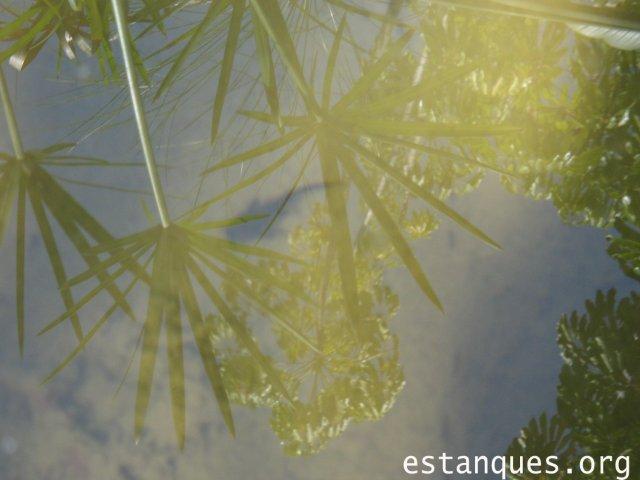 animales para estanques
