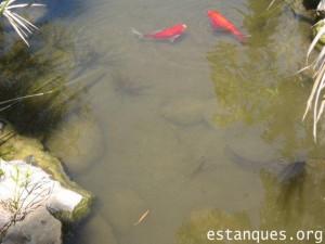 peces estanque españa