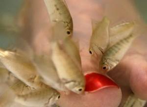 peces garra rufa