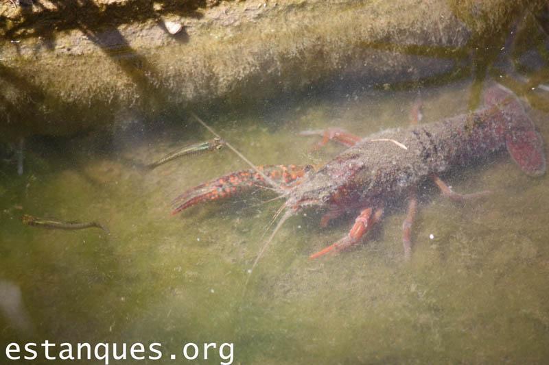 Fotos de estanques consejos y fotograf as para notizalia for Fotos estanques