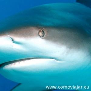 nadar con tiburones