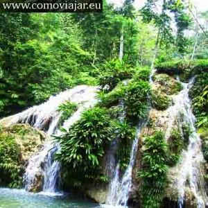 selva jungla guatemala