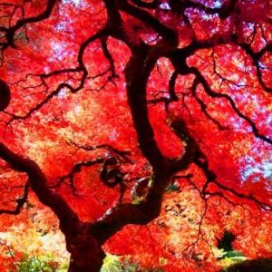 mejores fotos japon