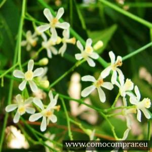 remedios naturales herboristerías