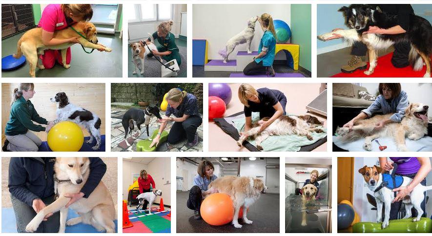 empleo en fisioterapia animales