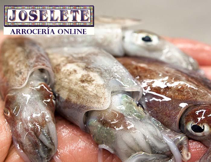 mayoristas pescado cadiz