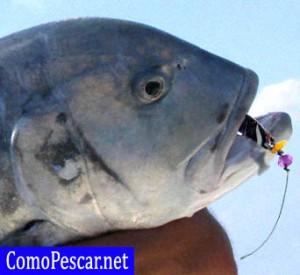 pesca artesanal españa