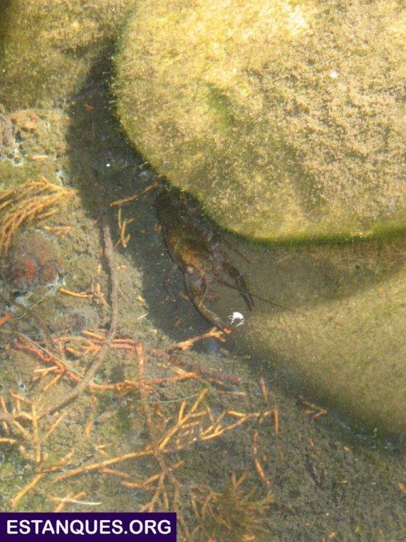 peces animales estanque