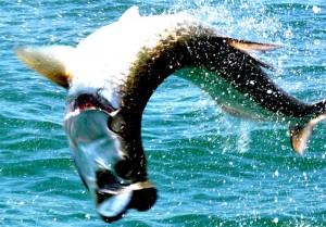 mejores fotos pesca