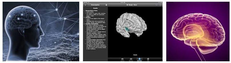 como funciona cerebro notizalia