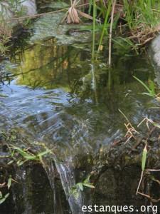 fotos de estanques