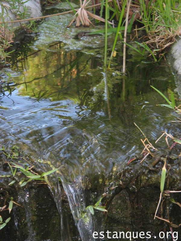 Crear y mantener un ecosistema en el estanque: equilibrio de animales