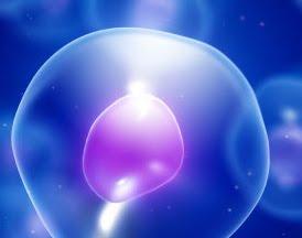 inmunidad celulas madre