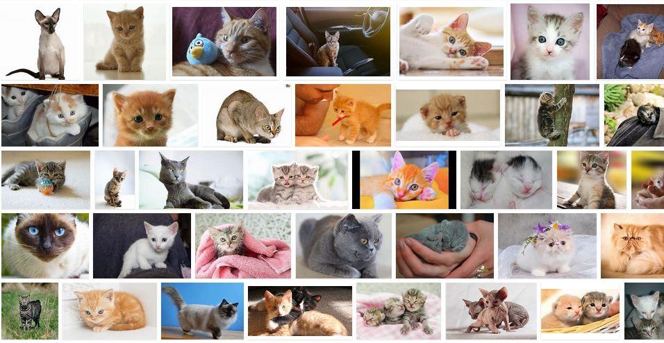 gatos pequeños cuidados