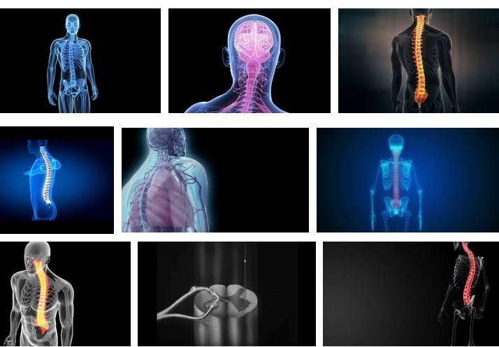medula espinal que es como funciona