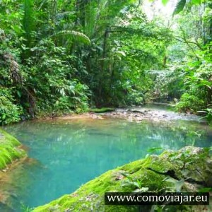 jungla selva guatemala
