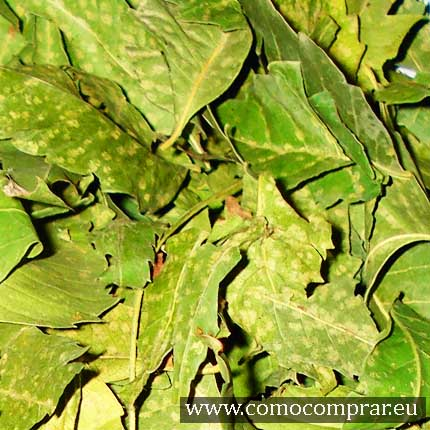 herboristerias baratas online