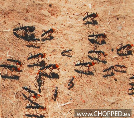 matar hormigas casa